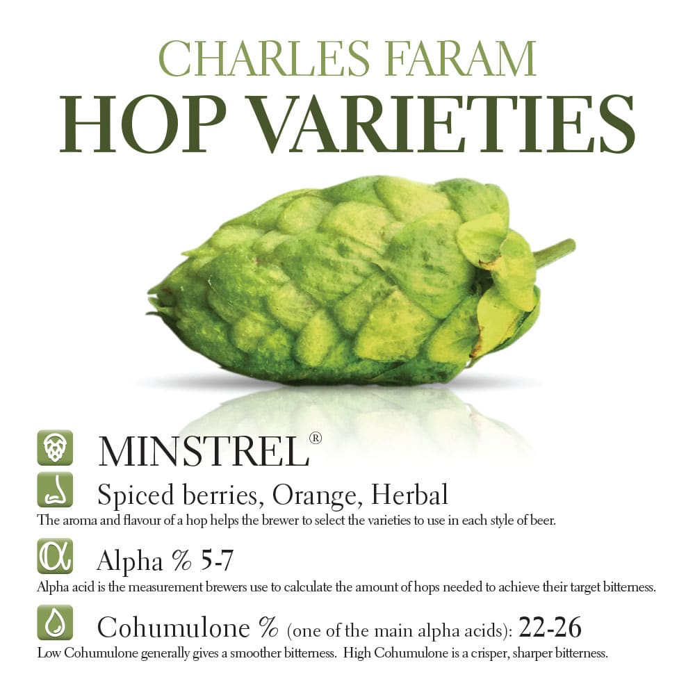 This photo shows the characteristics of the Minstrel hop variety