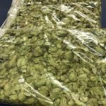 Picture of new hop variety in leaf form